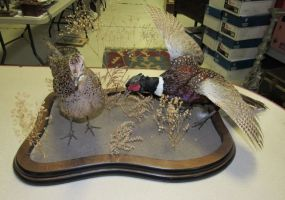 Pheasant and Hen Taxidermy
