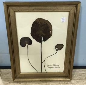 American Waterlily Framed