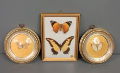 Three Butterfly Pictures
